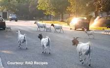 Over one hundred escaped goats surprised residents when roaming a Boise neighborhood.