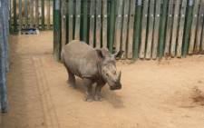 Rhino. Picture: Christa Eybers/EWN
