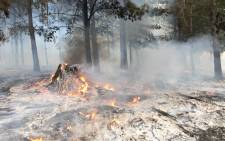 Controlled burning taking place in Tokai on Forestry/SANParks property bordering homes on 4 March 2015 Picture: Aletta Gardner/EWN.