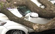 A vehicle damaged by a tree during a storm in Johannesburg on 5 November 2018. Picture: Johannesburg EMS