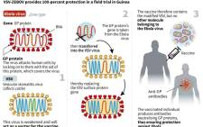 Graphic illustrating how the VSV-ZEBOV vaccine against Ebola works.