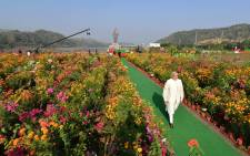 The statue of Sardar Vallabhbhai Patel is seen in the distance as Prime Minister Narendra Modi passes through a field of flowers. Picture: @narendramodi/Twitter