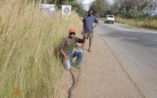 Chawatama Marimo catches a 5 metre long mamba. Picture: Facebook.