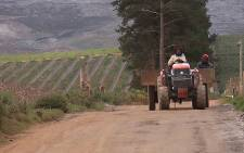 FILE: As dam levels continue to rise, EWN visited Western Cape farms to find out how drought affected production. Picture: EWN.