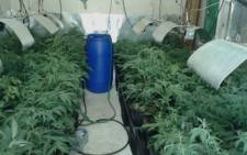 A man was arrested after a hydroponic dagga lab was found on a Richwood smallholding on 16 December, 2015. Picture: Twitter @SAPoliceService.
