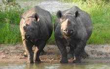 Two black rhino. Picture: Sharon Haussmann