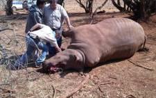 FILE PICTURE: A dead rhino bull.