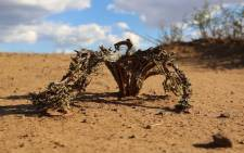 A dead plant in the drought-stricken Free State. Picture: Christa Eybers/EWN.