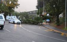 The power of the gale force winds has uprooted trees in Cape Town. Picture: Christa Eybers/EWN.