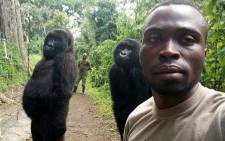 Mathieu Shamavu poses with the two orphaned female gorillas in Democratic Republic of Congo's Virunga National Park. Picture: @virunga/Facebook.com.