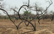 The Central Karoo and West coast have been hardest hit by the drought. Picture: Freeimages.com