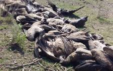 Some of the critically-endangered vultures found dead from suspected poisoning in Botswana's northeastern Makgadikgadi wetlands. Picture: BirdLife Botswana/Facebook