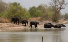 Elephants at Tapoa River, at the W National Park of Niger. W-Arly-Pendjari is a west African nature reserve spanning Benin, Burkina Faso and Niger. Picture: Hamissou Halilou Malam Garba/ UNESCO.