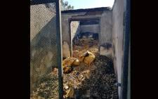 A fire ravaged through the Kitty and Puppy Haven's building in Midrand. Picture: Kitty and Puppy Haven Facebook page.