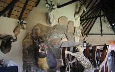 Stuffed animals in the home of rhino poaching accused Dawie Groenewald. Picture: Taurai Maduna/EWN