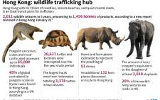 Data showing wildlife that being smuggled in Hong Kong. Picture: AFP