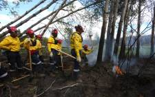 A group of South African firefighters work to uproot a tree as they mop-up hot spots in an area close to Anzac, outside of Fort McMurray, Alberta on June 2, 2016.  Picture: AFP.