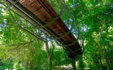 FILE: The 'Boomslang' canopy walkway was officially unveiled at Kirstenbosch in May 2014. Picture: Adam Harrower