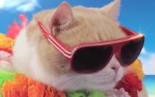 Celebrity cat Brother Cream is earning hundreds of thousands of dollars starring in advertising campaigns