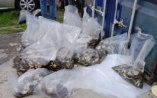 Some of the bags of abalone police recovered from a Hawston man. Picture: SAPS.