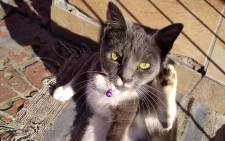 Ash, one of Faieza Jacobs's three cats, was found dead on 25 July 2021. Picture: Supplied