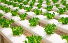 Greenhouse, hydroponics, farming. Picture: Pixabay.com