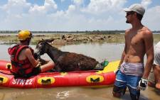 The NSRI's Vaal Dam duty crew on 27 December 2020 was alerted following reports of a donkey stranded on an island on the Vaal Dam near Deneysville. Picture: Nsri.org.za