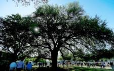 The famous Eisenhower Tree which guarded the 17th fairway at Augusta National. Picture: Facebook.com.