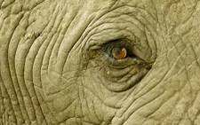 An elephant close up. Picture: Conservation Action Trust