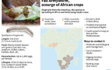 Factfile on the African Armyworm, which is spreading in Africa and destroying many cereal crops.
