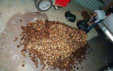 A man has been found in possession of more than 14,000 pieces of abalone. Picture: Saps Twitter: @SAPoliceService