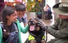 A drug-sniffing dog in Colombia. Picture:CNN