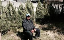 Ghalieb Walker sells old fashioned pine Christmas trees for a living. Picture: Rafiq Wagiet/EWN