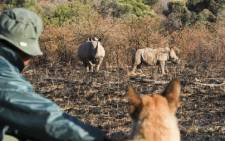 Russell, a Belgian shepherd dog, is the Pilanesberg Nature Reserve's newest weapon against rhino poachers. Picture: Sapa.