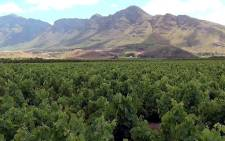 A report by the SAHRC says problems with the land restitution process have not been resolved. Picture: EWN.