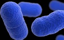 A microscopic view of the listeria bacteria. Picture: Centers for Disease Control and Prevention