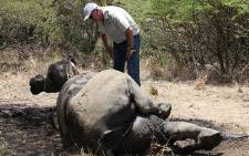 Finfoot Lake Reserve owner Miles Lappeman inspects a dead rhino on 19 November 2012. Picture: Taurai Maduna/EWN.