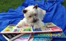 Reading Education Assistance for Dogs. Picture: READ official Facebook page.