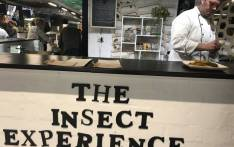 Chef Mario Barnard (right) prepares insect delicacies for customers at The Insect Experience pop-up restaurant in Woodstock. Picture: Monique Mortlock/EWN