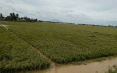 FILE: A flooded rice field in the Philippines. Picture: AFP