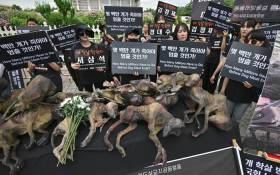 South Korean animal rights activists hold placards next to likenesses of dead dogs during a protest against the dog meat trade in front of the National Assembly in Seoul on 12 July 2019. Picture: AFP