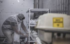 A morgue attendant at the Johannesburg branch of the South African funeral and burial services company Avbob checks the condition of a protective wrapping inside a refrigerated container where bodies of patients deceased with COVID-19 related illnesses are kept isolated ahead of their burials on 22 January 2021. Picture: AFP