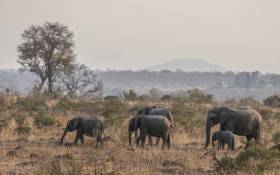 FILE: A herd of elephants. Picture: Abigail Javier/EWN