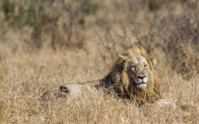 FILE: A man tracking game has been mauled to death by two young male lions in the in the Marakele National Park, Limpopo. Picture © utopia88/123rf.com