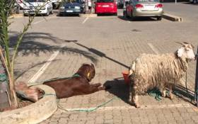 Community members contacted the SPCA and shared concerns about the animals found in the parking lot at a local shopping centre in Gauteng. Picture: Christa Eybers/EWN.