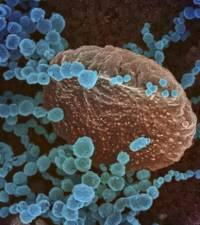 Specialist: New coronavirus variant unlikely to cause surge in cases in SA