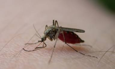WHO says eradicating malaria 'can be done', but first aim is to control it
