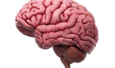 COVID can infect brain cells: study