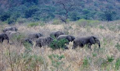 MY TAKE: Connecting with nature at the Elephant Coast