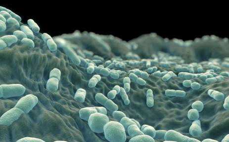 A view of the listeria bacteria. Picture: National Institute for Communicable Diseases.